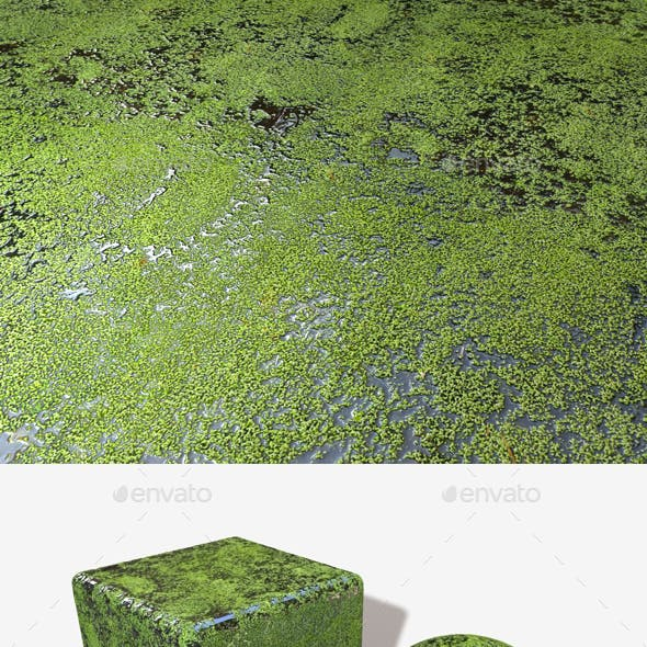 Pond Seamless Texture
