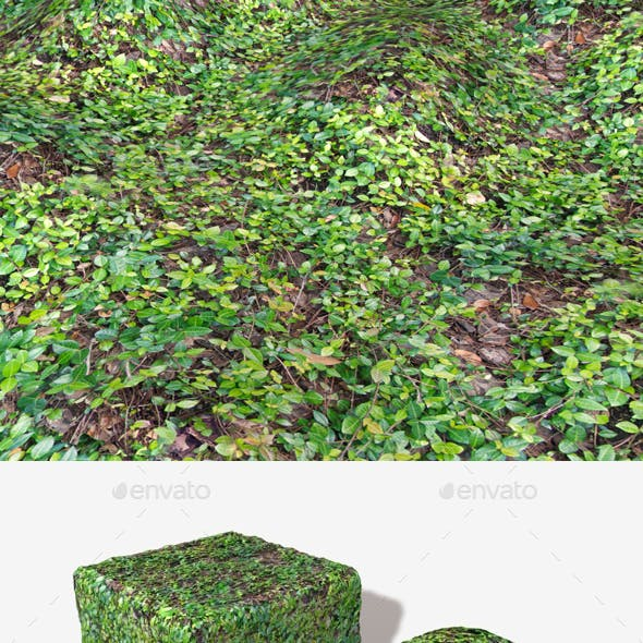 Vine Covered Ground Seamless Texture