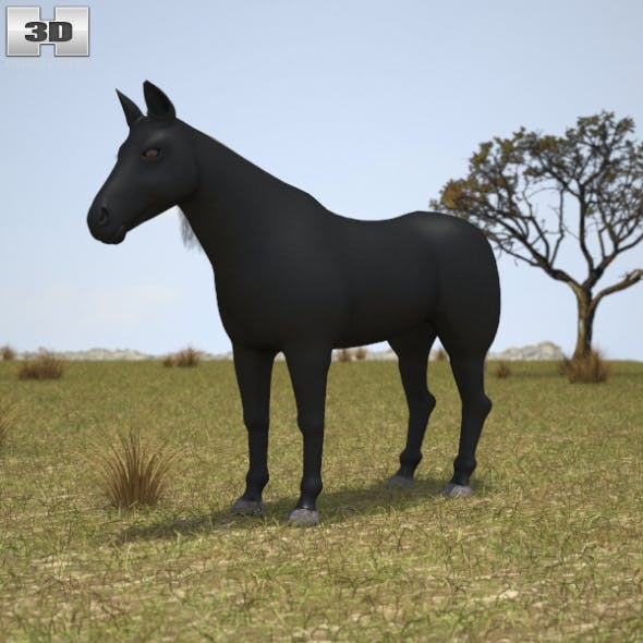 Rocky Mountain Horse - 3DOcean Item for Sale