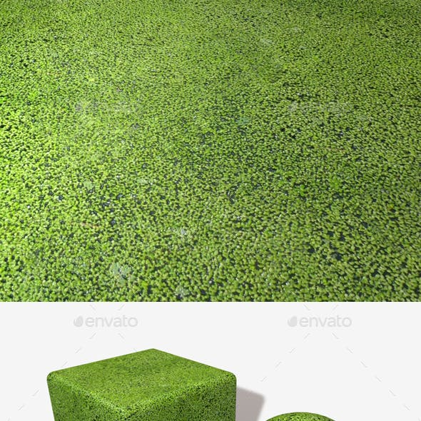 Pond Weeds Seamless Texture