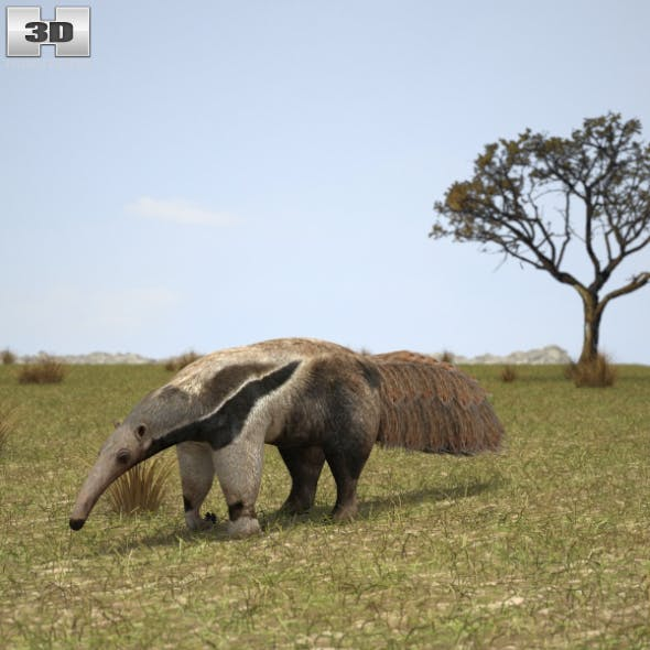 Giant Anteater - 3DOcean Item for Sale