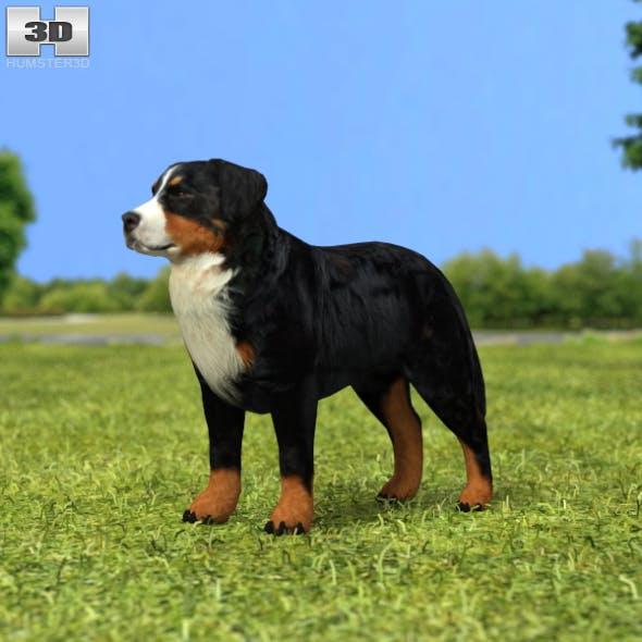 Bernese Mountain Dog - 3DOcean Item for Sale