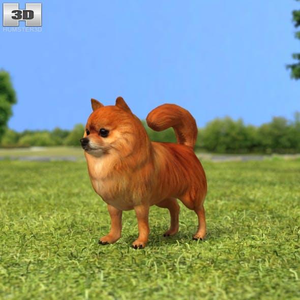 Pomeranian - 3DOcean Item for Sale