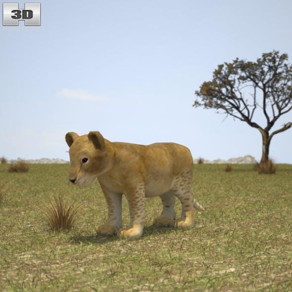 Lion Cub - 3DOcean Item for Sale