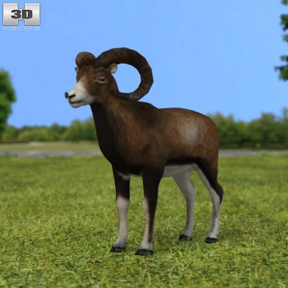Mouflon - 3DOcean Item for Sale