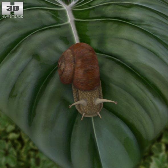 Snail - 3DOcean Item for Sale
