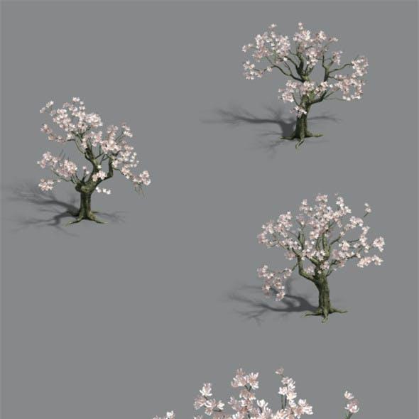 Trees - flowers tree