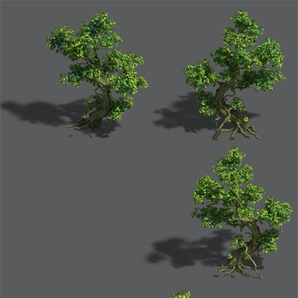 Trees - crooked neck tree