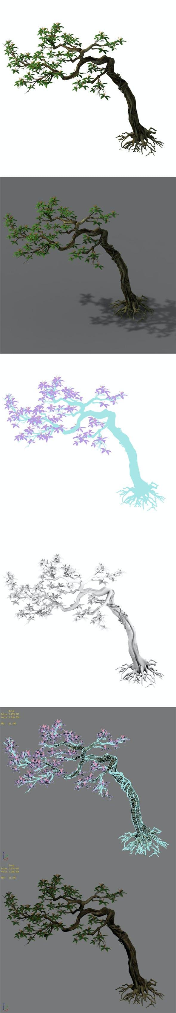 Plant - safflower tree - 3DOcean Item for Sale