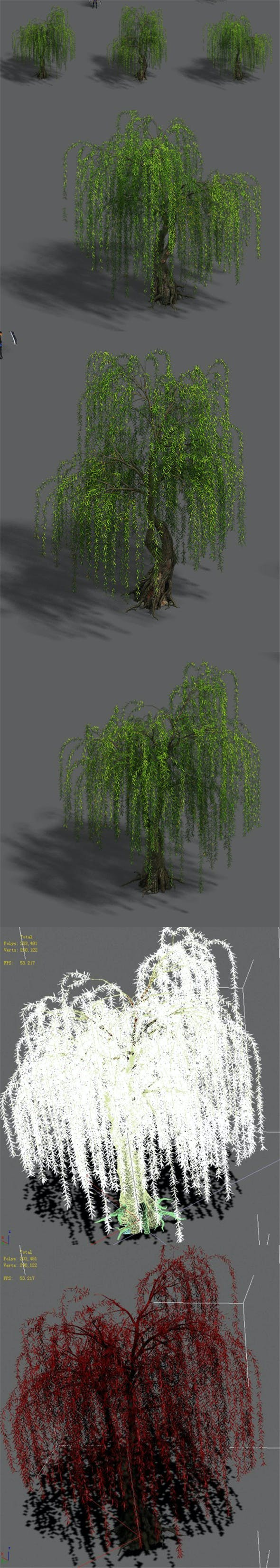 Plant - Willow 13 - 3DOcean Item for Sale