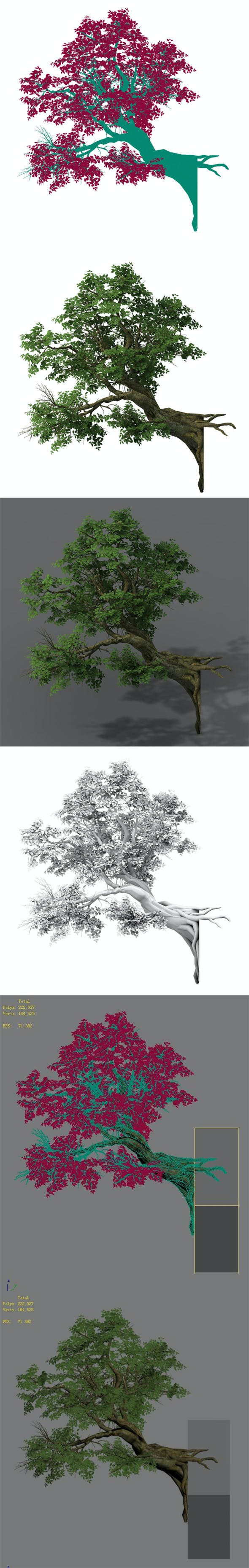 Plant - banyan tree 05 - 3DOcean Item for Sale