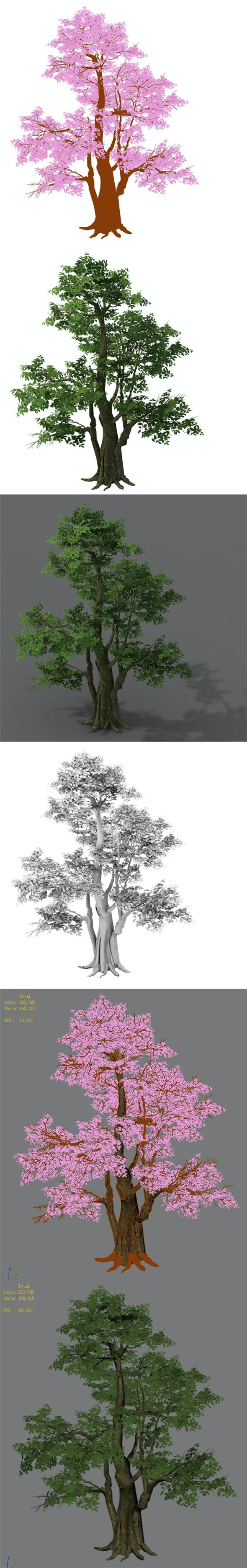 Plant - banyan tree 06 - 3DOcean Item for Sale
