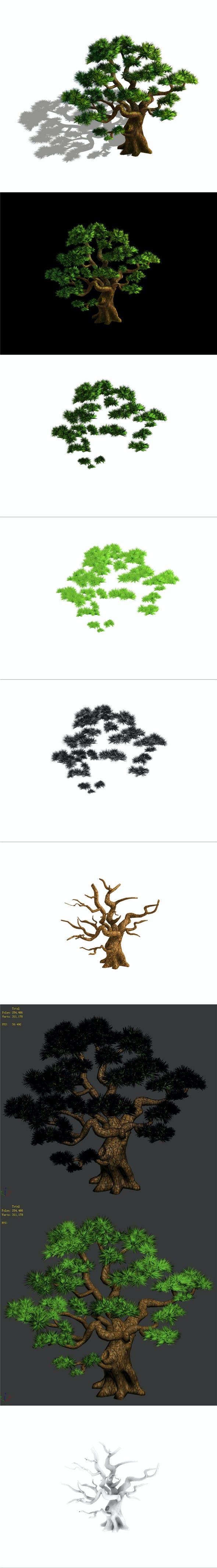 Plant - Pine 05 - 3DOcean Item for Sale