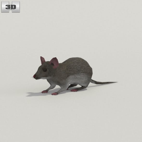 Mouse Gray