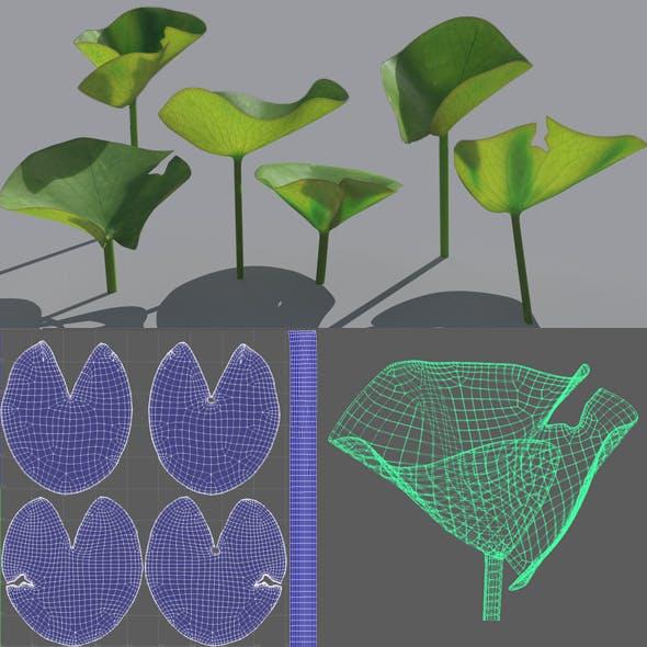 Lilies Leaves - 3DOcean Item for Sale