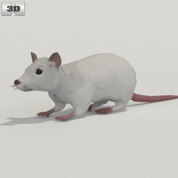 White Rat - 3DOcean Item for Sale