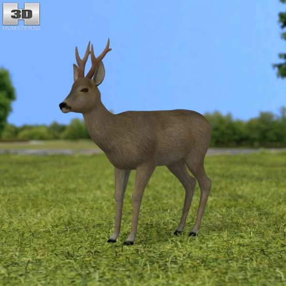 Roe Deer - 3DOcean Item for Sale