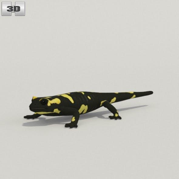 Spotted Salamander - 3DOcean Item for Sale