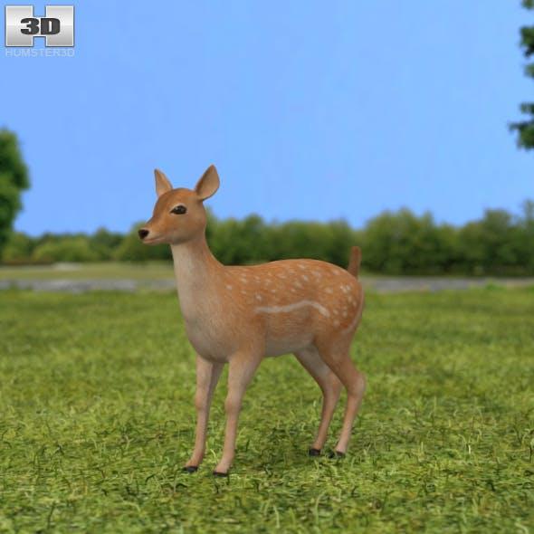 Fallow Deer Fawn - 3DOcean Item for Sale