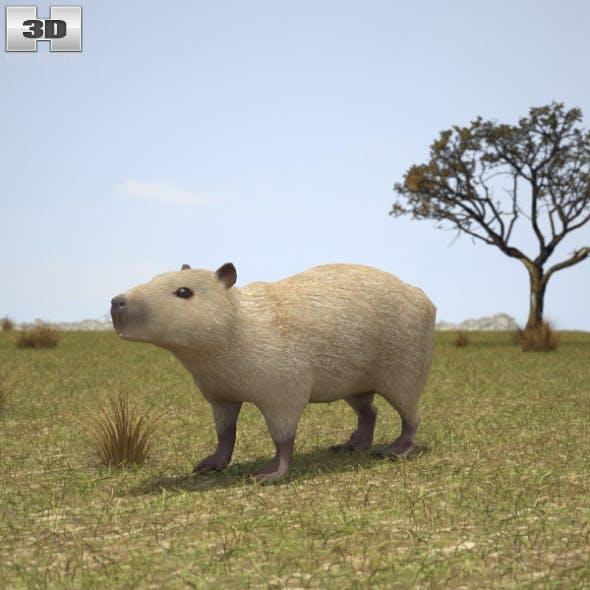 Capybara - 3DOcean Item for Sale