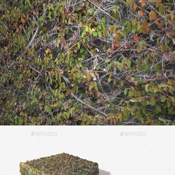 Autumn Wall Climbers Seamless Texture
