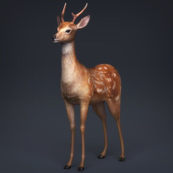 Low Poly Realistic Deer - 3DOcean Item for Sale