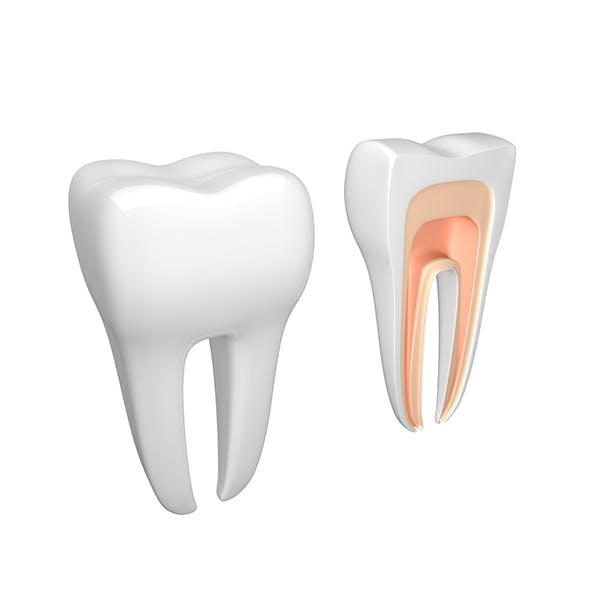 Tooth dental - 3DOcean Item for Sale