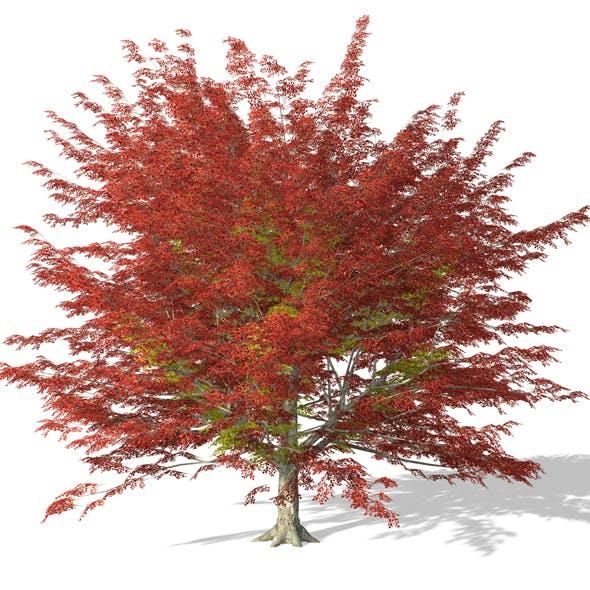 Tree - 00003