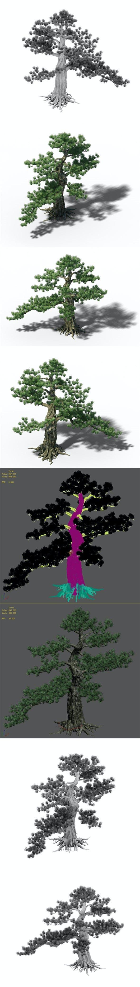 Big Tree - White Chishan - Pine 02 - 3DOcean Item for Sale