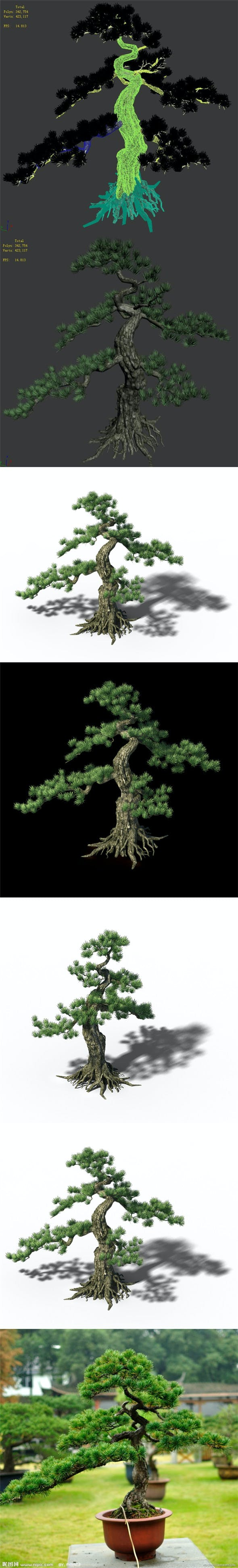 Trees - Huanglongshan Pine 01 - 3DOcean Item for Sale