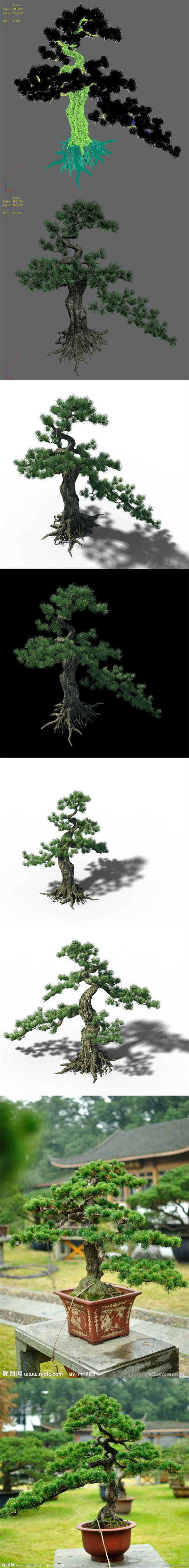 Trees - Huanglongshan Pine 02 - 3DOcean Item for Sale