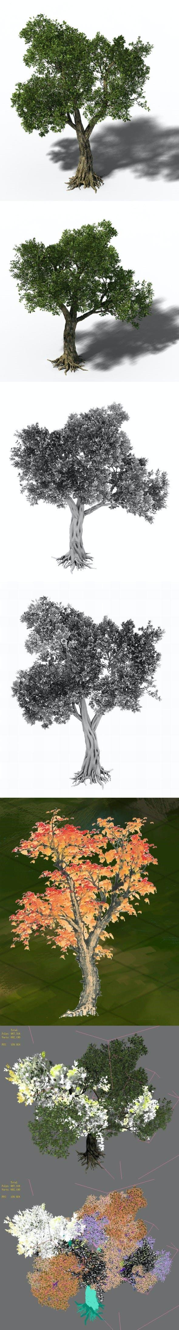 Windland Prairie - Big Tree 01 - 3DOcean Item for Sale