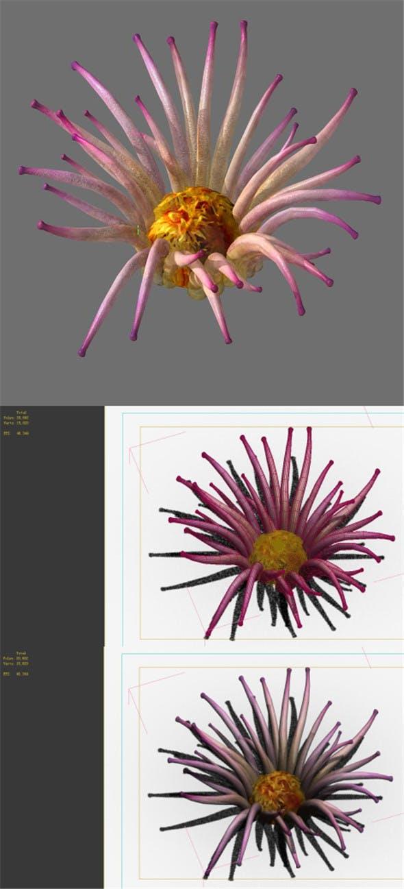Game Model - Seabed - Biology - 3DOcean Item for Sale