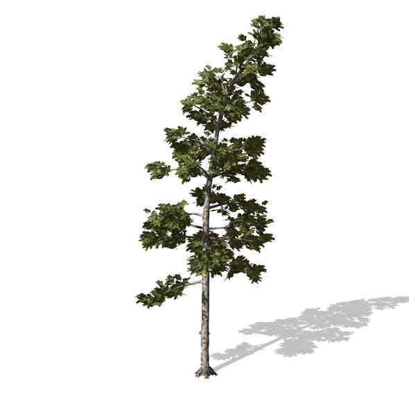 Tree - 00008