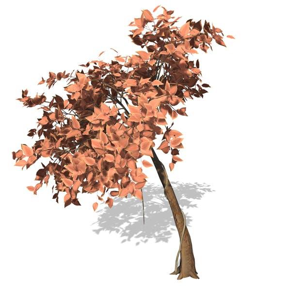 Tree - 00009