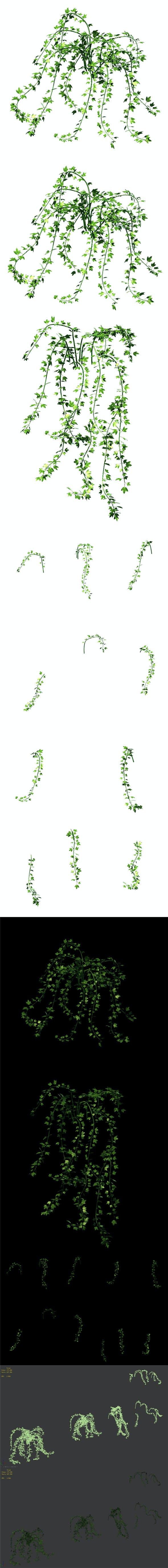 General plant - vines 35 - 3DOcean Item for Sale