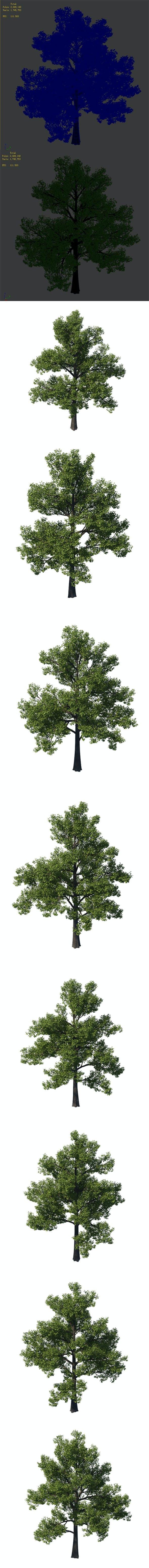 General plant - tree 35 - 3DOcean Item for Sale