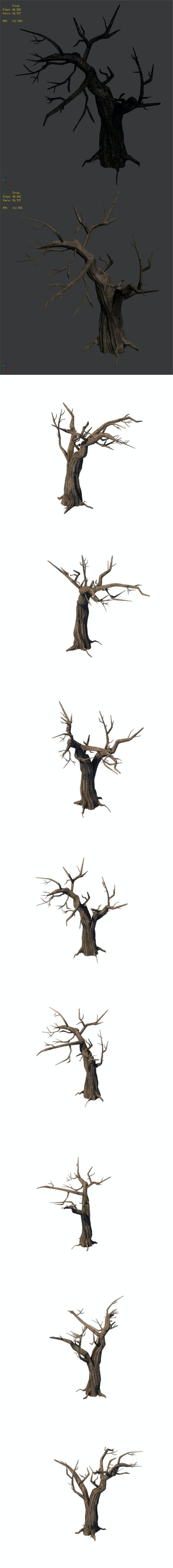 General Plant - Trees 05 - 3DOcean Item for Sale