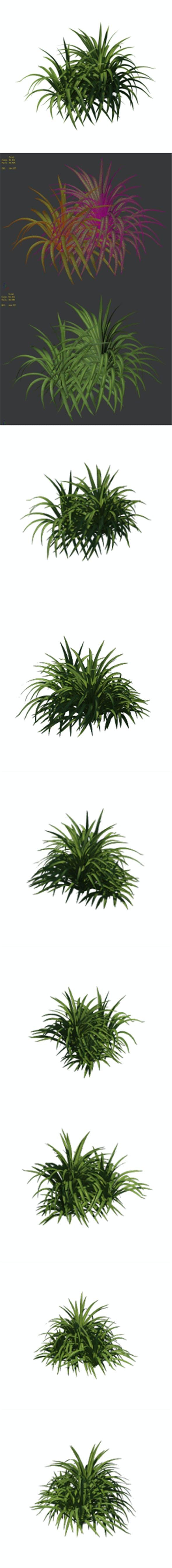 Plant - flowers 32 - 3DOcean Item for Sale