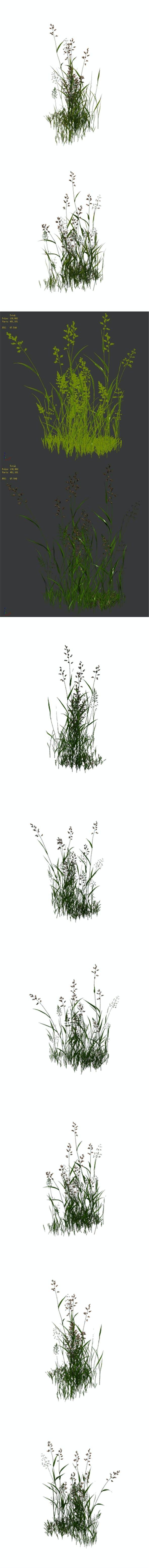 Plant - flowers 33 - 3DOcean Item for Sale