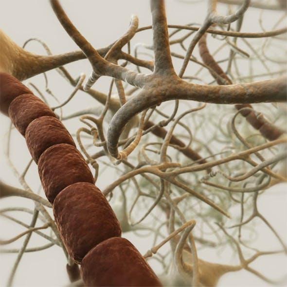 Neurons. Closed neural network 3D model