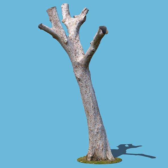 Dion Branch (3D scan)
