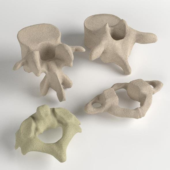 Human Vertebrae Set - 3DOcean Item for Sale