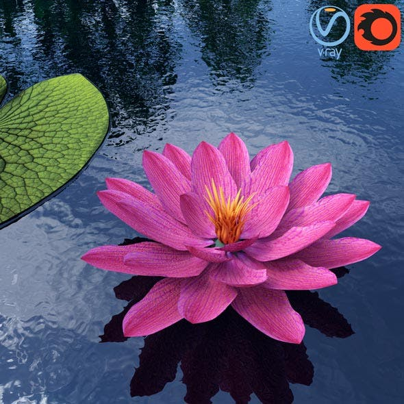 Water Lily - Plant - 0001 - 3DOcean Item for Sale