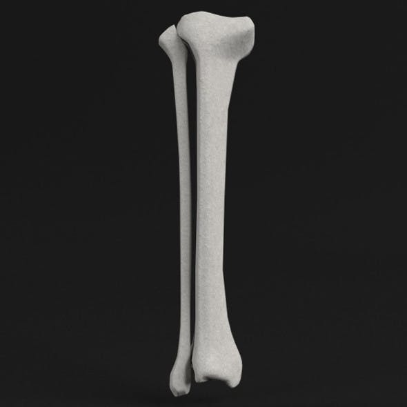 Anatomy - Tibia and Fibula