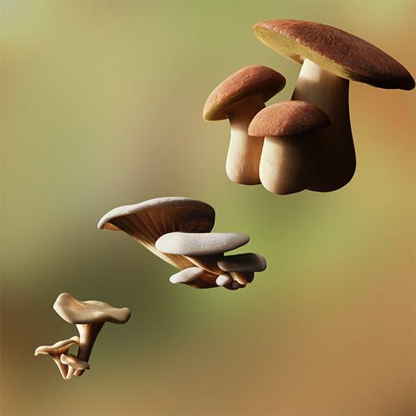 Game ready PBR Mushrooms SET 1 - 3DOcean Item for Sale
