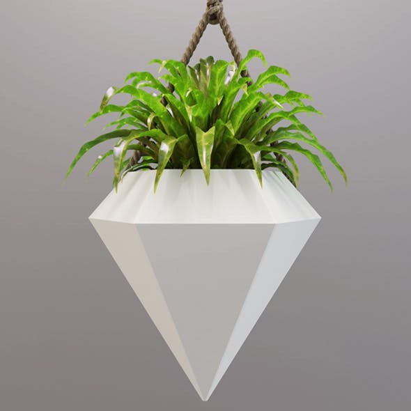 Vase diamond with a small plant