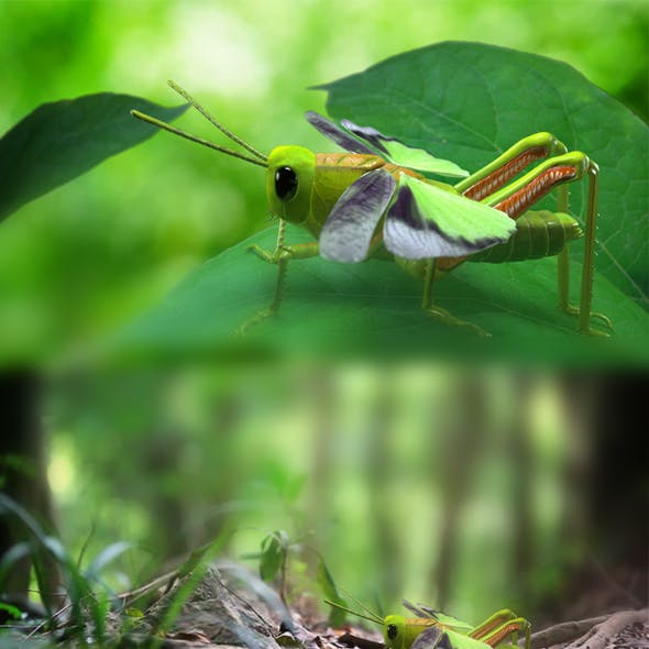 Grasshopper - sauterelle