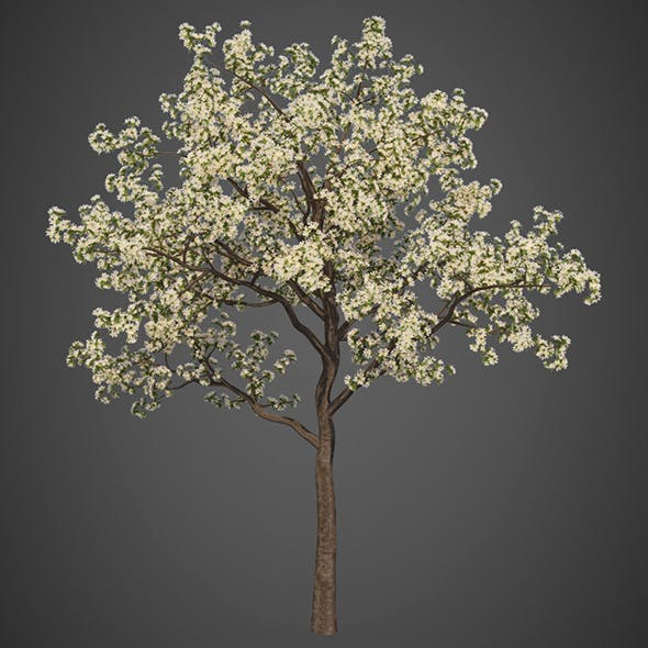 Vray Ready Flower Tree
