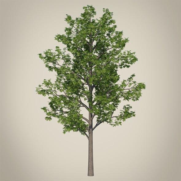 Vray Ready Tree